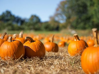 orange pumpkins at outdoor farmer market. pumpkin patch.  Copy s
